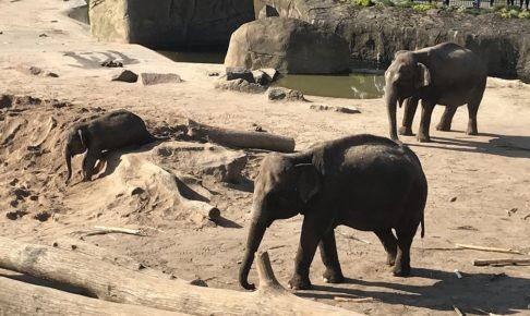 ケルン動物園のゾウ