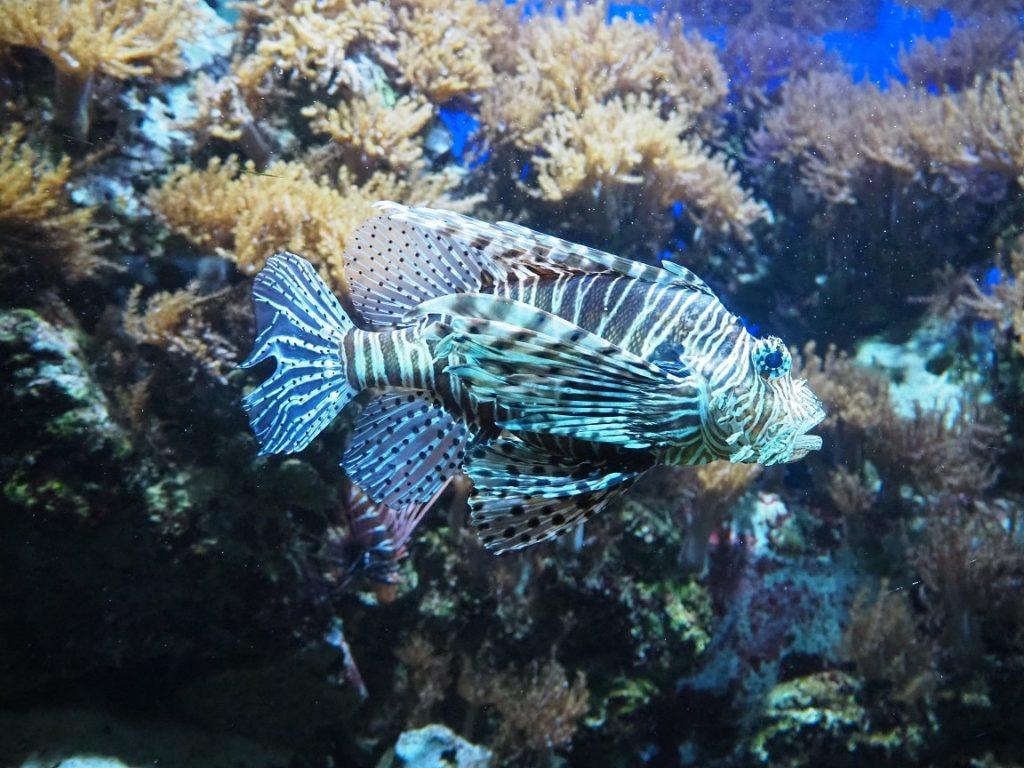 ケルン水族館の魚