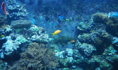 ケルン水族館の様子