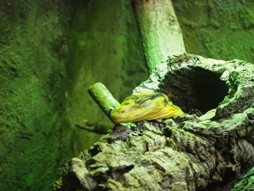 ケルン水族館の爬虫類