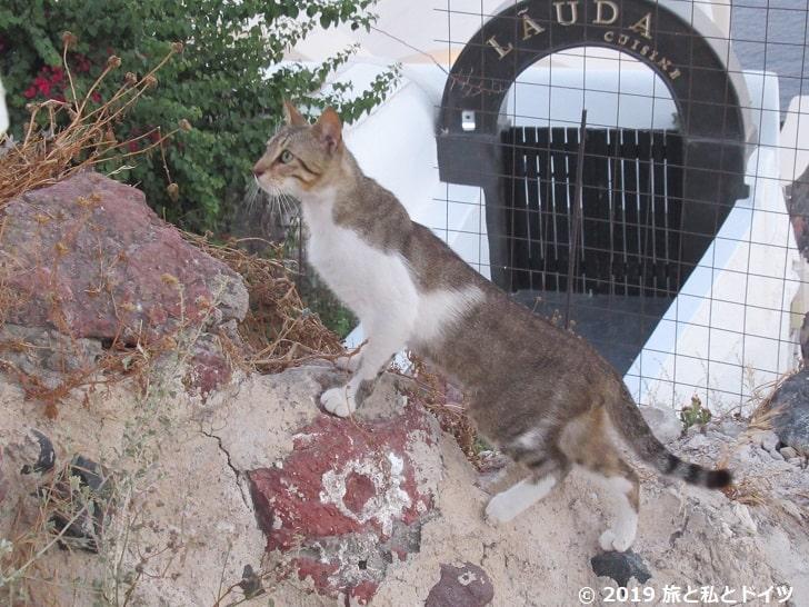 レストラン「1800 Froga」で見た猫