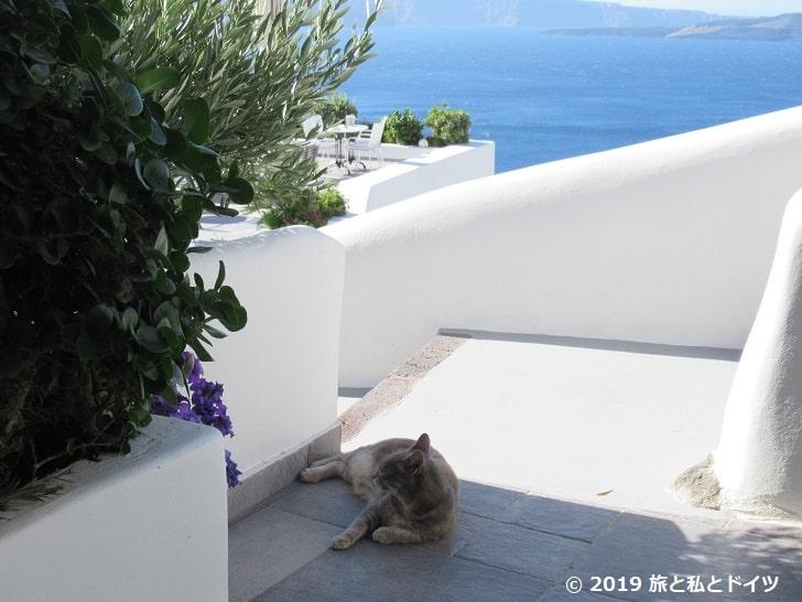 ホテルの部屋の前でくつろぐ猫
