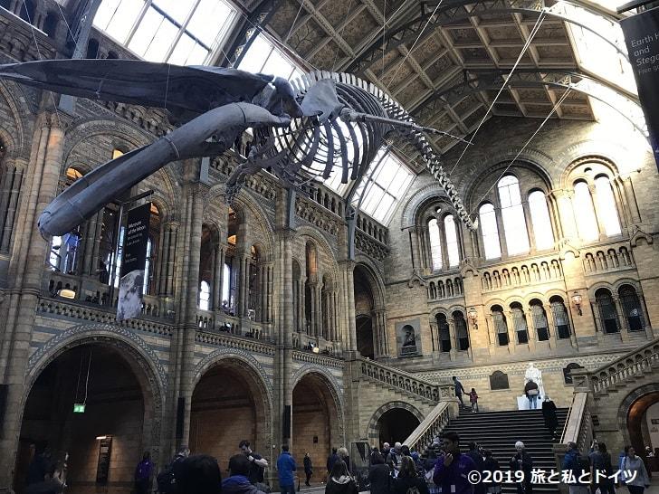 ロンドン自然史博物館の館内